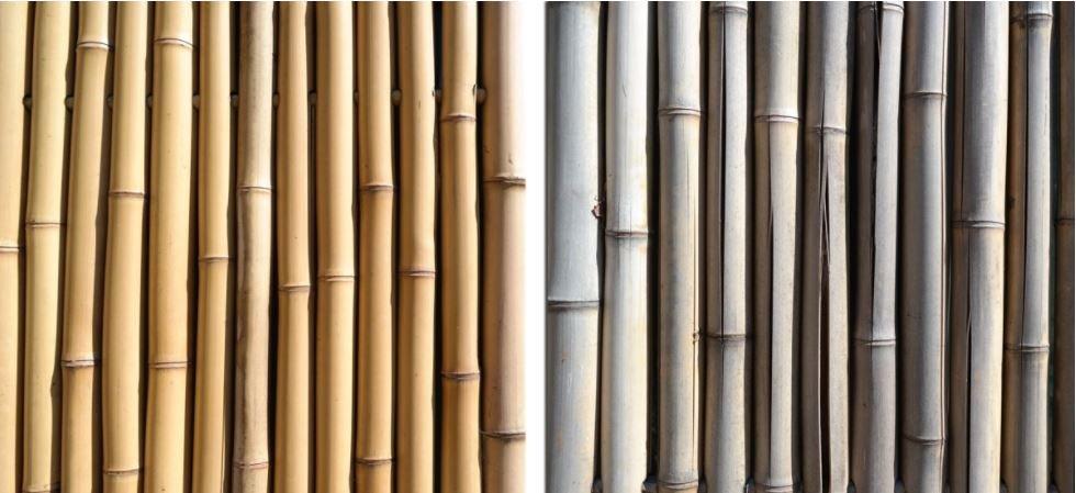 fissure ou éclatement de bambous