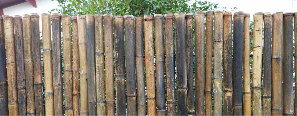 taches sur bambou